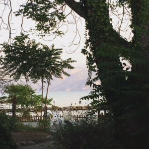 vue 1 edelweiss