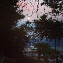vue 2 edelweiss