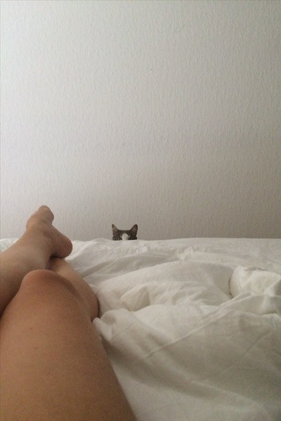 peekaboo cat chat coucou