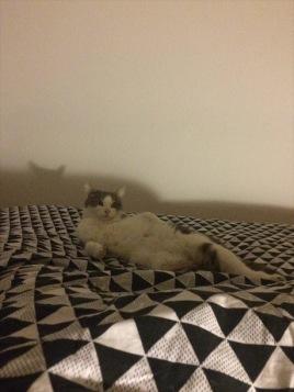 chat position improbable je me la pète