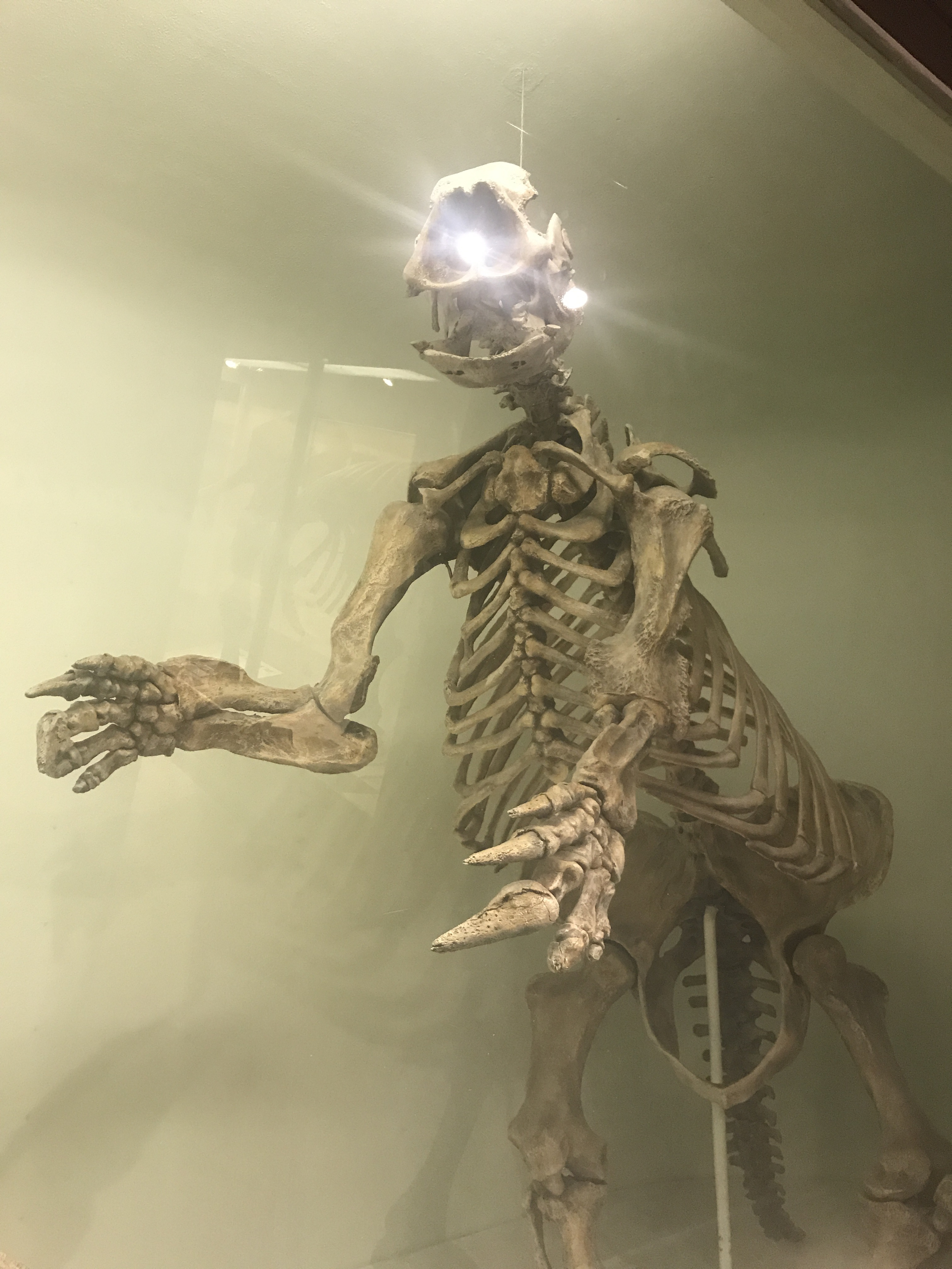Museum-cambridge-havard-boston