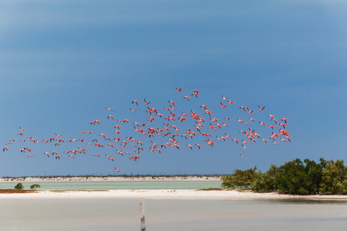 rio-lagartos-flamants-roses-beatrice-baude-copines-de-voyage-mexique-chicandswiss 2